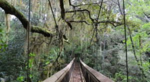 A Ravine Walk In Florida, Ravine Gardens State Park Is Full Of Adventure