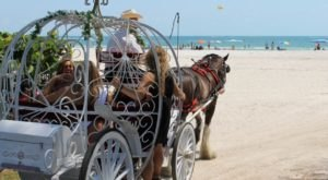 These 8 Horse Drawn Carriage Rides In Florida Are Pure Magic