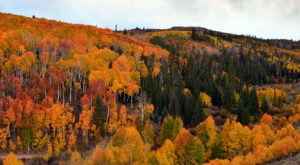 12 Country Roads In Utah That Are Pure Bliss In The Fall
