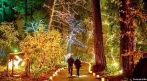 10 Christmas Light Displays In And Near Portland That Are Pure Magic