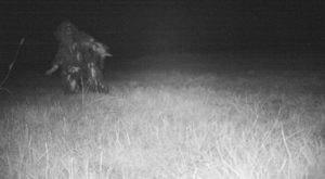Kansas Police Set Up Wildlife Cam, Capture Something Even Better On Film Instead