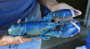 The 10 Weirdest And Strangest Things That Have Ever Happened In Maine