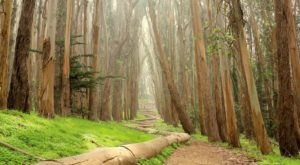 10 Easy Hikes To Add To Your Outdoor Bucket List In San Francisco