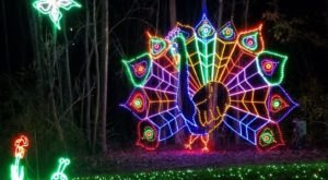 Visit 9 Christmas Lights Displays In South Carolina For A Magical Experience