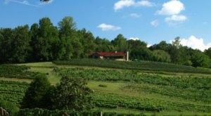 Take These 12 Vineyard Vacations In Georgia For A Unique Getaway