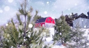 11 Christmas Tree Farms In Nebraska That Will Make Your Holidays Magical