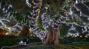 If You Live In Louisiana, You'll Want To Visit This Amazing Park This Winter