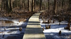 10 Picturesque Trails In Maryland That Are Perfect For Winter Hiking