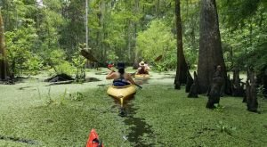 Take This Tour to Uncover The Hidden Secrets of Louisiana's Wetlands