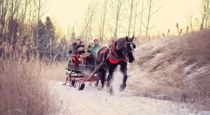 This Sleigh Ride Tour In Alaska Is What Winter Wonderland Dreams Are Made Of