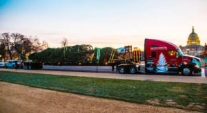 The Amazing Journey America's Christmas Tree Took From Idaho To The Capitol