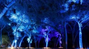 The Enchanted Forest Of Light In Southern California That Is Beyond Magical