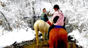 The Winter Horseback Riding Trail In Massachusetts That's Pure Magic