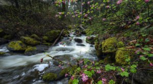 Oregon's Magical Fairy Ponds Are Almost Too Beautiful To Be Real