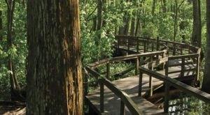 The Hidden Park That Will Make You Feel Like You've Discovered Louisiana's Best Kept Secret