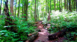 One Of The Most Beautiful Day Hikes In America Is Right Here In Virginia