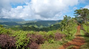 Everyone Should Take This Easy Hike Through The Hawaiian Jungle At Least Once