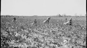 These 15 Rare Photos Show Alabama's Agricultural History Like Never Before