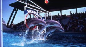 These 13 Rare Photos Of Florida In The 1980s Will Mesmerize You