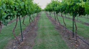 There's a Winery On This Beautiful Farm In Oklahoma And You Have To Visit
