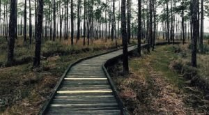 The Easy Winter Hike In New Orleans That's Positively Bewitching