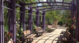 Most People Have No Idea There's A Secret Garden Hiding In Nevada And It's Magical