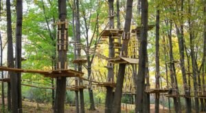 An Adventure Park Hiding In The Middle Of A Michigan Forest, TreeRunner Is An Exciting Attraction