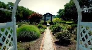 The Beautiful Lavender Farm Hiding In Plain Sight In Delaware That You Need To Visit