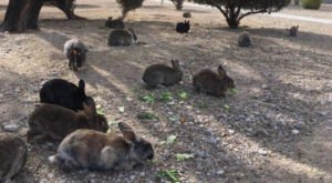 Hordes Of Feral Bunnies Are Taking Over A Major Nevada City And Nobody Knows What To Do