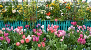 The One Spot In Massachusetts That's Filled With Flowers All Winter Long