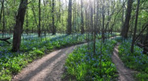 A Secret Garden Hike In Virginia, The Bluebell Trail Is Full Of Enchanting Views