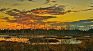 11 Insanely Beautiful Photos Of New Jersey's Pinelands That Will Make You Want To Visit