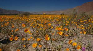 The Divine Natural Phenomenon In Southern California You Won't Want To Miss