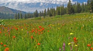 Experience A Spring Full Of Color In This Wildflower Road Trip Through Nevada