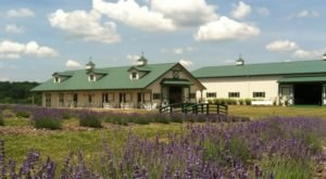 The Beautiful Lavender Farm Hiding In Plain Sight Near Pittsburgh That You Need To Visit