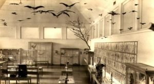 This Taxidermy Museum In New Hampshire Is Not For The Faint Of Heart