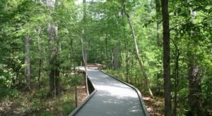 11 Underrated Trails In Louisiana You Can Explore Anytime Of Year
