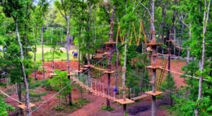 There's An Adventure Park Hiding In The Middle Of A Connecticut Forest And You Need To Visit