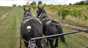 This Amazing Wagon Ride Will Take You Through Missouri's Wine Country