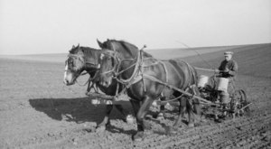 These 27 Rare Photos Show Iowa's Farming History Like Never Before