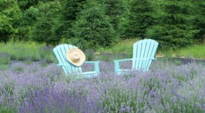 The Beautiful Lavender Farm Hiding In Plain Sight In New Jersey That You Need To Visit