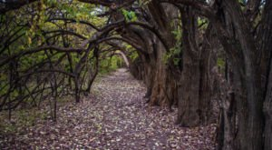 Kansas's Tunnel Of Trees Is Positively Magical And You Need To Visit