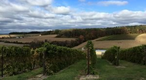 The Remote Winery In Pennsylvania That's Picture Perfect For A Day Trip
