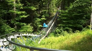 The Mountain Coaster In Massachusetts That Will Take You On A Ride Of A Lifetime