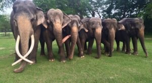 Walk With Elephants At Two Tails Ranch, An Exotic Animal Sanctuary In Florida
