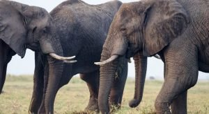 A One Of A Kind Elephant Sanctuary Is Opening Right Here In Georgia