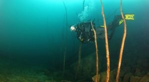 The Remains Of Ohio's Underwater Forest Are Completely Mesmerizing