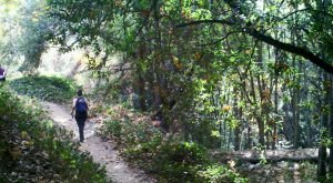 Take A Walk Through An Enchanted Forest At Chantry Flat Recreation Area In Southern California