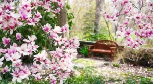 The Secret Garden In Delaware You're Guaranteed To Love
