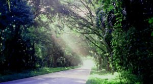 Florida's Tunnel Of Trees Is Positively Magical And You Need To Visit